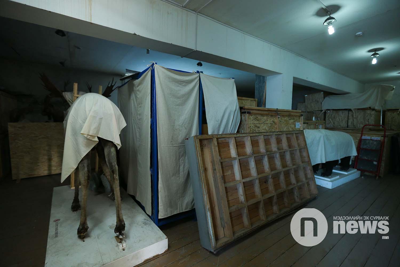 Байгалийн түүхийн музейн үзмэр хадгалалт (2)