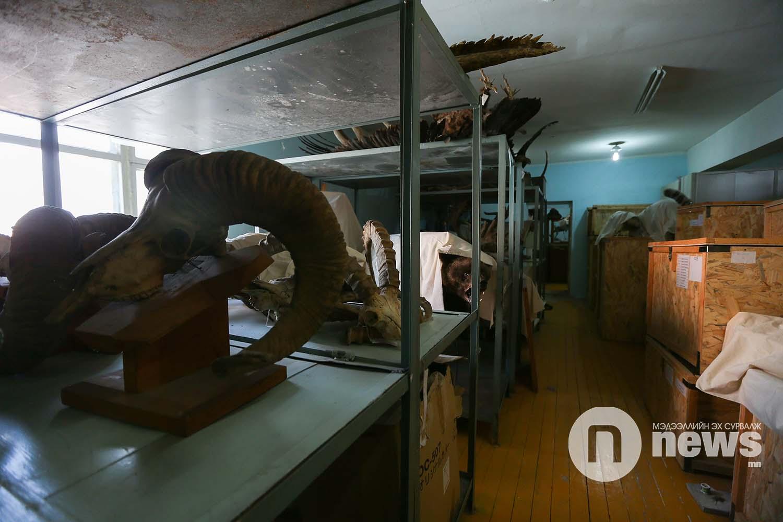 Байгалийн түүхийн музейн үзмэр хадгалалт (23)