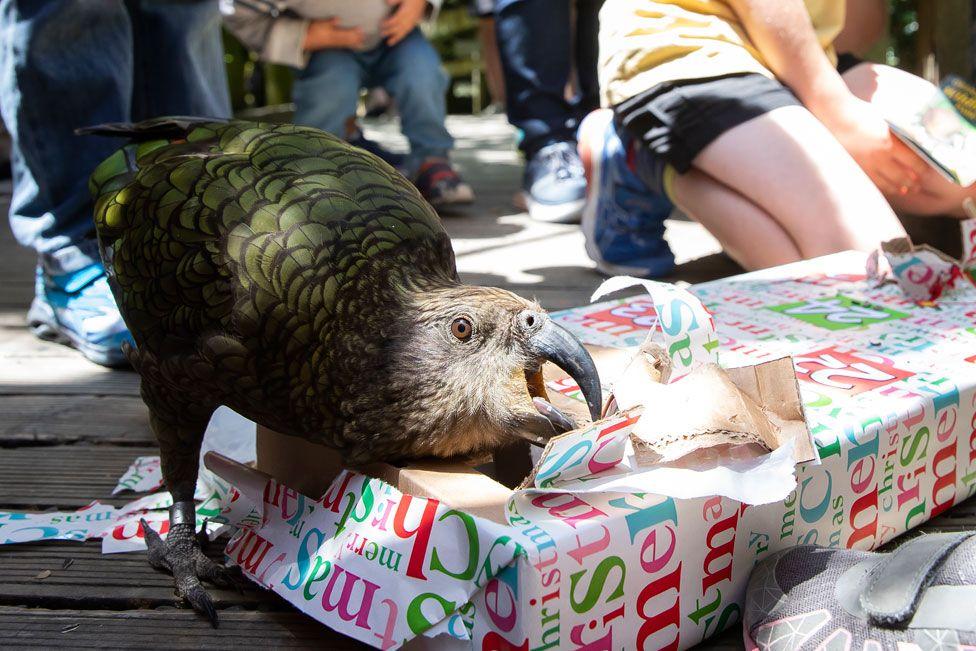 _110295134_zoo_christmas_4