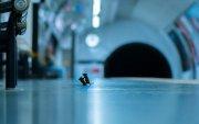 """Метроны буудал дээр """"зодолдож"""" буй хулгануудын зураг шилдгээр тодорчээ"""