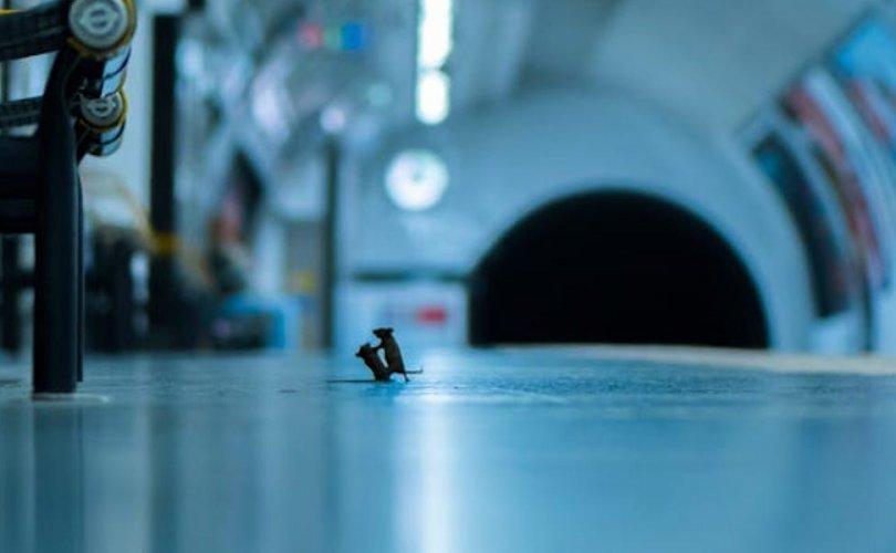 Метронд зодолдож буй хулгануудын зураг шилдгээр тодорчээ