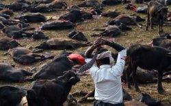 Хамгийн олон амьтнаар тахил өргөдөг баяр Балбад болж байна