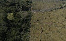 Амазоны ширэнгэн ой сүүлийн арван жилд 10.3 сая хөлбөмбөгийн талбайтай тэнцэх хэмжээгээр жижгэрчээ