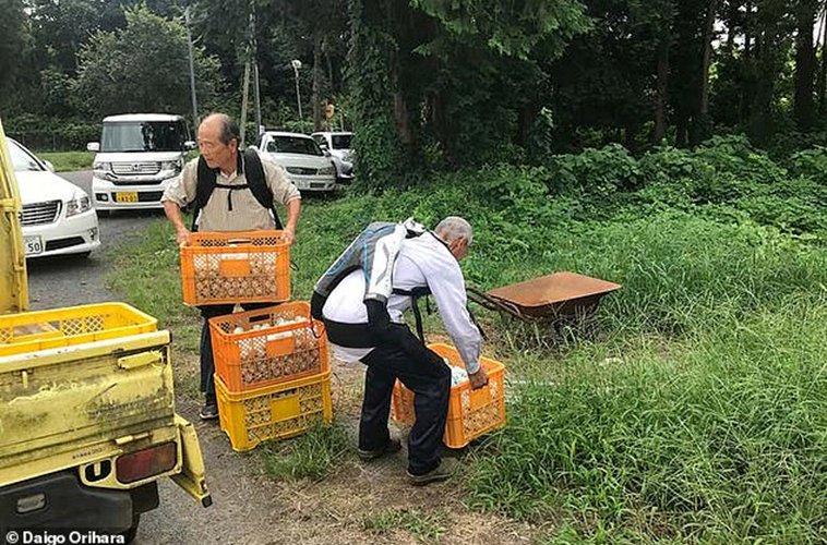 Хөгшин Японы 70 настнууд ажил хийхийн тулд экзоскелет өмсч байна