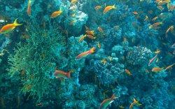 Далай тэнгисийн хүчилтөрөгч эрчимтэй багасч байна