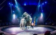 Амралтын хөтөч: Гайхамшигт цирк