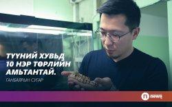 Монголд байдаггүй амьтан цуглуулагч