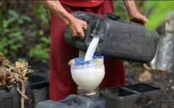Филиппин: Зул сарын баяраар нэрмэл архинд 300 хүн хорджээ