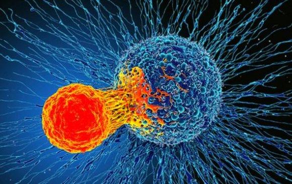 Бүх хорт хавдрыг эмчлэх шинэ нээлт