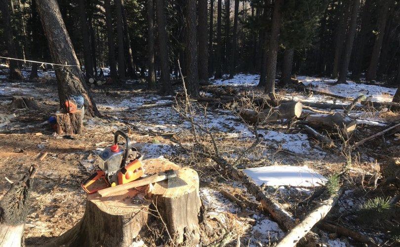 Ойн цэвэрлэгээ нэрийн дор иргэд нойтон ногоон мод сүйтгэж байжээ