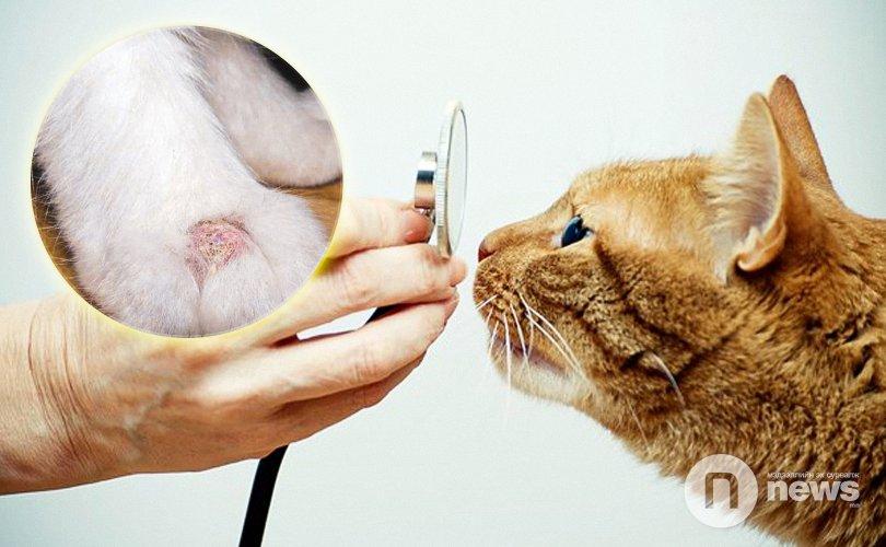 Гэрийн тэжээвэр амьтад хүүхдүүдэд халдвар тараагч болдог
