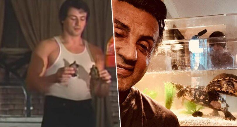 """Сильвестр Сталлоне """"Роки"""" киноны хоёр яст мэлхийгээ тэжээж байна"""