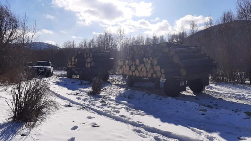 Хууль бусаар мод бэлтгэж, 300 орчим сая төгрөгийн хохирол учруулжээ