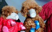 Хятадууд амьтдаа коронавирусээс хамгаалж байна