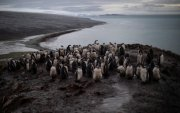 Антарктидад түүхэнд байгаагүй дулаан тохиолоо