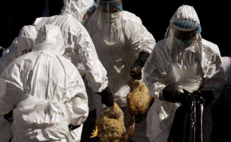 Хятадад коронавирусийн хажуугаар шувууны ханиад дэгдлээ
