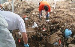 Гурван булшнаас 6000 орчим цогцос олджээ