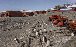 Антарктидад 18,3 хэм хүрч халжээ