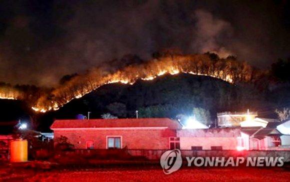 Өмнөд Солонгост хүчтэй шуурга шуурч, ой хээрийн түймэр гарчээ