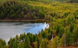 Өнөөдөр олон улсын ойн өдөр
