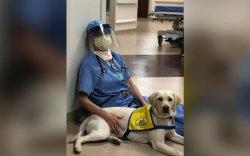 Эмч нарын сэтгэл засалд нохой ашиглаж байна
