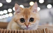 Муур коронавирусийн халдварыг эзнээсээ авчээ