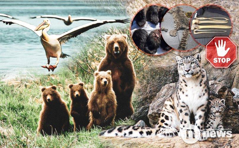 Ховор амьтдаа хулгайн гараас хамгаалъя