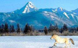 Монгол Улсыг коронавирус гараагүй, аялахад таатай орноор нэрлэжээ