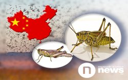 Хятадын дараагийн асуудал нь царцааны нүүдэл