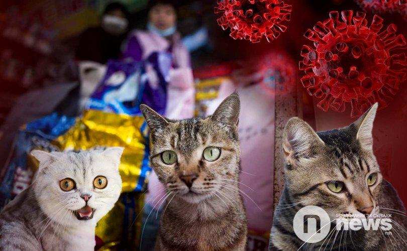 Ухань хотын муурнуудын 15 хувь нь халдвартай