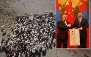 """""""Хятад руу 30 мянган хонь амьдаар гаргасан ч малын ген алдагдахгүй"""""""