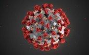 Коронавируст халдварын нөхцөл байдлын шинэчлэгдсэн мэдээлэл