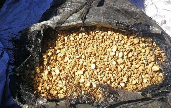 Хилээр 110 кг дэрвэгэр жиргэрүүний үр гаргахыг завджээ