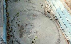 Амьтны хүрээлэнгийн барын сэтгэл өвдөм бичлэг