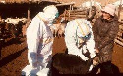 Баянзүрх дүүрэгт шүлхий өвчнөөс урьдчилан сэргийлэх вакцин хийв