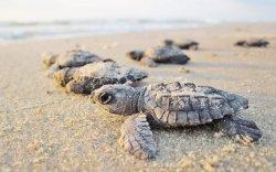 Хөл хорио: Яст мэлхийнүүд айх аюулгүй өндөгнөөсөө гарч байна