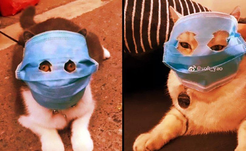 Хонгконгод дахин нэг муур халдвар авчээ