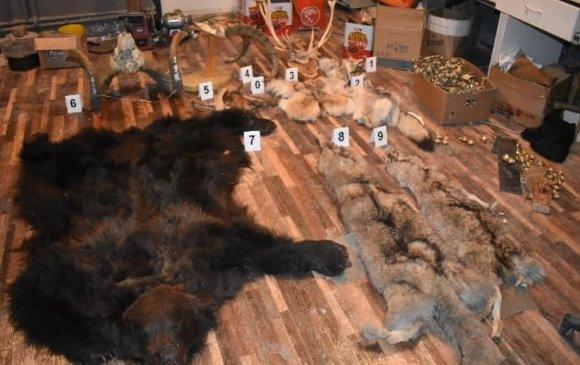 Тас шувууны хөл, чонын арьс зэргийг худалдан борлуулахыг завджээ