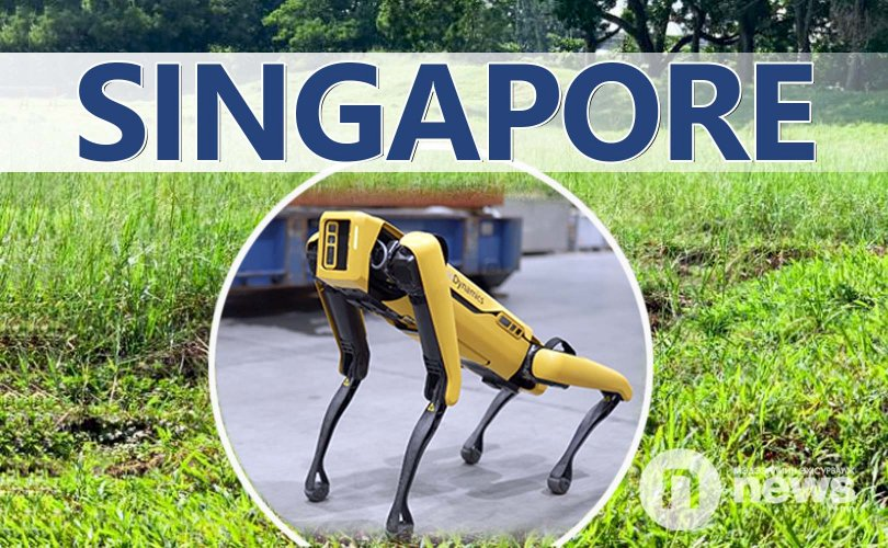 Сингапурт робот нохойгоор хөл хорио сахиулж байна