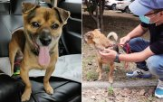 Ухань хотын эмнэлэгт эзнээ гурван сар хүлээсэн нохой