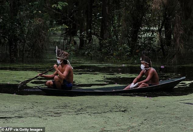 Амазон омгууд цар тахалтай уламжлалт эмчилгээгээрээ тэмцэж байна