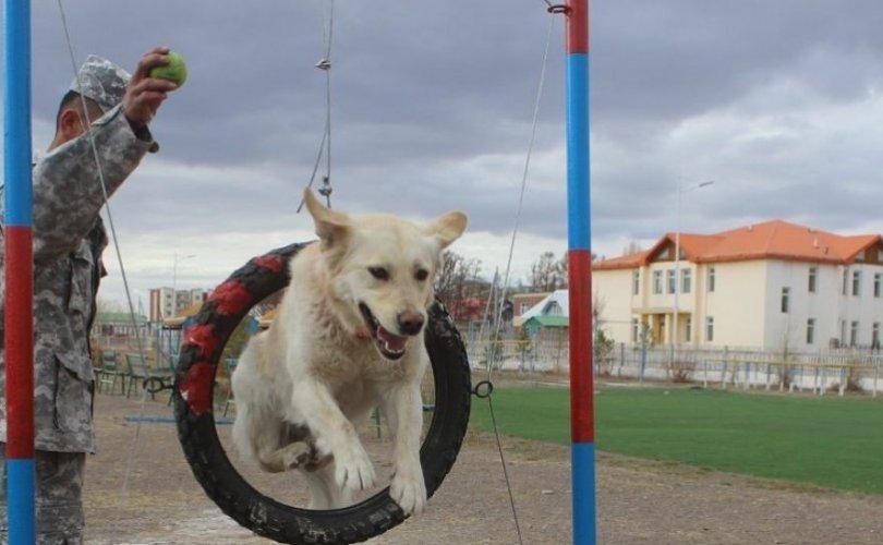 Аврагч нохойны сургалт, дадлагын талбайтай боллоо