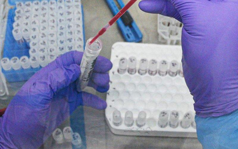 Covid-19 өвчин эндемик болж магадгүй. Эндемик гэж юу вэ?