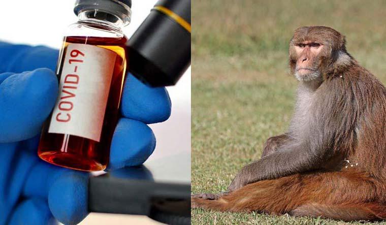 Сармагчин covid-19 шинжилгээний дээжийг авч зугтаажээ