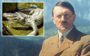 """Гитлерийн """"хайртай"""" Санчир матар амьсгал хураажээ"""