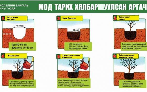 """""""Бүх нийтээр мод тарих үндэсний өдөр"""" болно"""