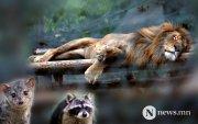 Зоопаркийн амьтад золионд гарч байна