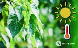 Улаанбаатарт 19-21 градус дулаан байна