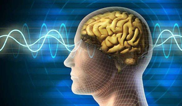 Хүчирхийлэлд өртсөн хүний тархины загварыг гаргав