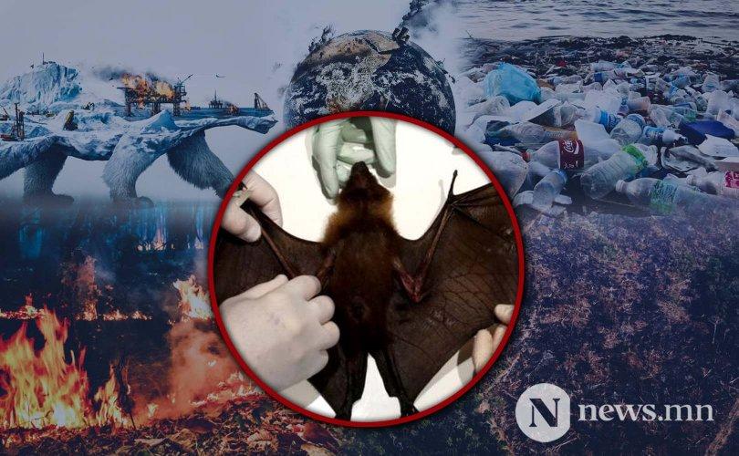НҮБ: Байгаль сүйтгэхийн хэрээр олон тахал дэгдэх аюултай